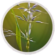 Grass In Flower Round Beach Towel