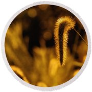 Grass In Golden Light Round Beach Towel