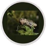 Grasshopper 2 Round Beach Towel