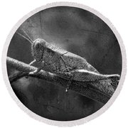 Grasshopper And Grunge In Black And White Round Beach Towel
