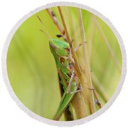 Grasshopper In Green Round Beach Towel