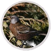Gray-crowned Rosy Finch Round Beach Towel