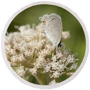 Gray Hairstreak Butterfly On Milkweed Wildflowers Round Beach Towel