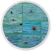 Gray Seals At Chatham - Cape Cod Round Beach Towel