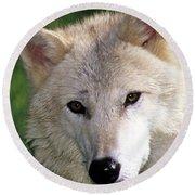 Gray Wolf Face Round Beach Towel