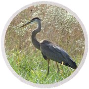 Great Blue Heron - Ardea Herodias Round Beach Towel