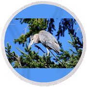 Great Blue Heron Concentration Round Beach Towel