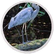 Great Blue Heron, Florida Round Beach Towel