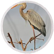 Great Blue Heron In Habitat Round Beach Towel