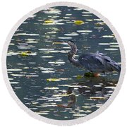 Great Blue Heron With Snack Round Beach Towel