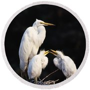 Great Egret In Nest With Young Round Beach Towel