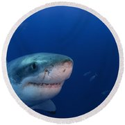 Great White Shark, Guadalupe Island Round Beach Towel