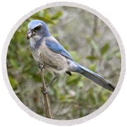 Greedy Florida Scrubjay Round Beach Towel