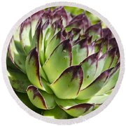 Green And Red Succulent Round Beach Towel