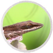Green Anole In Pastels Round Beach Towel