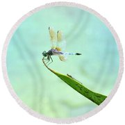 Green Dragonfly Waiting Round Beach Towel