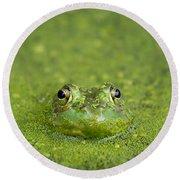 Green Frog Eyes Round Beach Towel