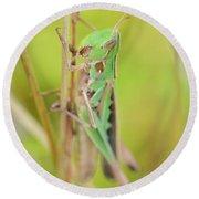 Green Grasshopper Round Beach Towel