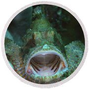 Green Grouper With Open Mouth, North Round Beach Towel by Mathieu Meur
