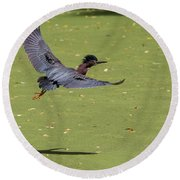 Green Heron In Flight Round Beach Towel