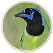 Green Jay Portrait Round Beach Towel