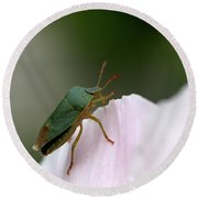 Green Shieldbug Round Beach Towel