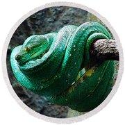 Green Snake Round Beach Towel