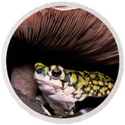 Green Toad Round Beach Towel