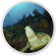 Green Turtle On Reef, Manado, North Round Beach Towel