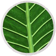 Green Veiny Leaf 1 Round Beach Towel