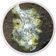 Green, White And Brown Flatworm, Bali Round Beach Towel
