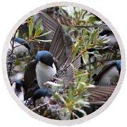 Grey Feathers - Tree Swallow Round Beach Towel