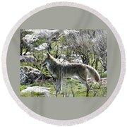 grey Fox 2 Round Beach Towel