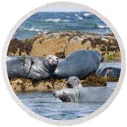 Grey Seals Round Beach Towel
