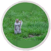 Grey Squirrel In The Rain II Round Beach Towel