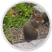Grey Squirrel Round Beach Towel
