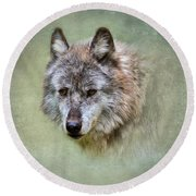 Grey Wolf Portrait Round Beach Towel