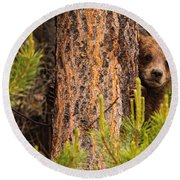 Grizzly Bear Cub Up A Tree, Yukon Round Beach Towel