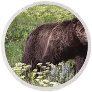 Grizzly Bear In Yellowstone Neg.28 Round Beach Towel