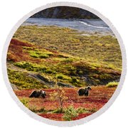 Grizzly Bears And Fall Colours, Denali Round Beach Towel