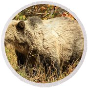 Grizzly Camouflage Round Beach Towel