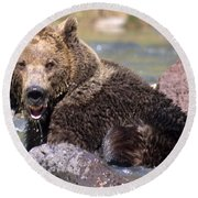 Grizzly Cavorts In Stream Round Beach Towel