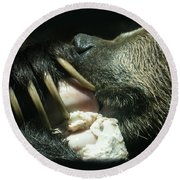 Grizzly Eating Round Beach Towel