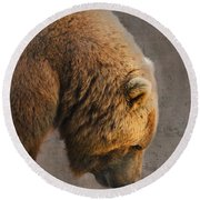 Grizzly Hanging Head Round Beach Towel
