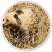 Grizzly In The Brush Round Beach Towel