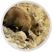 Grizzly On The Rocks Round Beach Towel