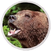 Grizzly Or Alaska Brown Bear Round Beach Towel