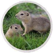 Ground Squirrels, Oak Hammock Marsh Round Beach Towel