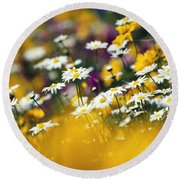 Group Of Daisies Round Beach Towel