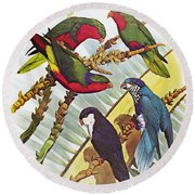 Group Of Lorys Round Beach Towel